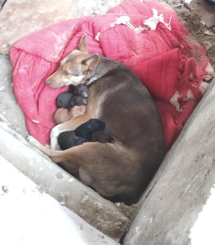 Уличная собака с щенками Собака, Щенки, Улица, Зима