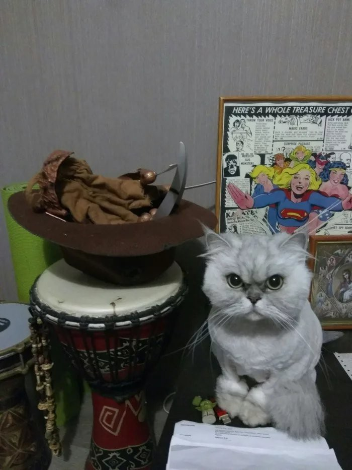 Стриженный котэ . Зовут Шуша. Шиншилловый перс . Прошу любить и жаловать.