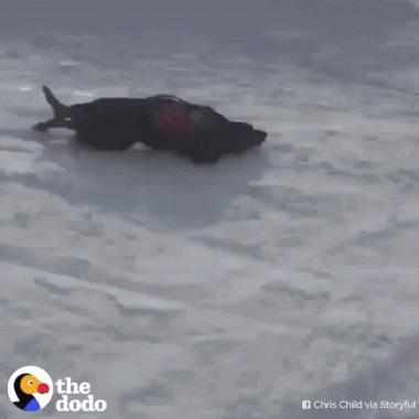 Собак-спасак Траки в свободное от работы время