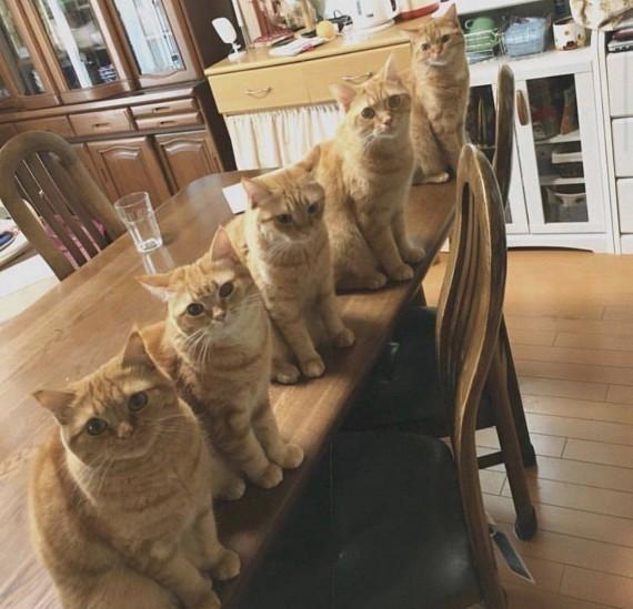 Ну всё мы ждём обед