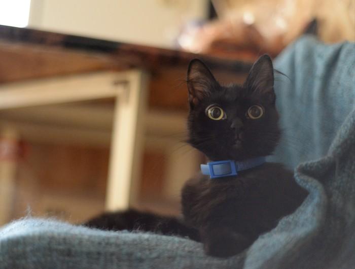 Как удивить кошку Кот, Котомафия, Удивление