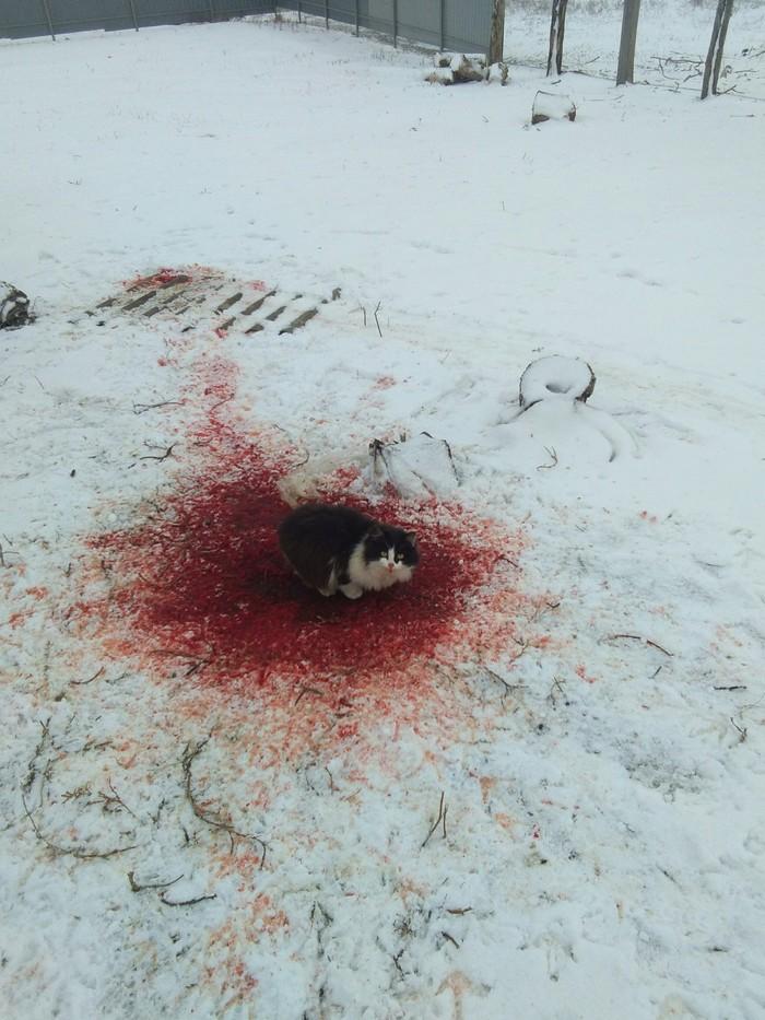 Пожалуй, я не хочу знать, что тут произошло... Кот, Кровь, Чудовище, Кровькишкирасчлененка