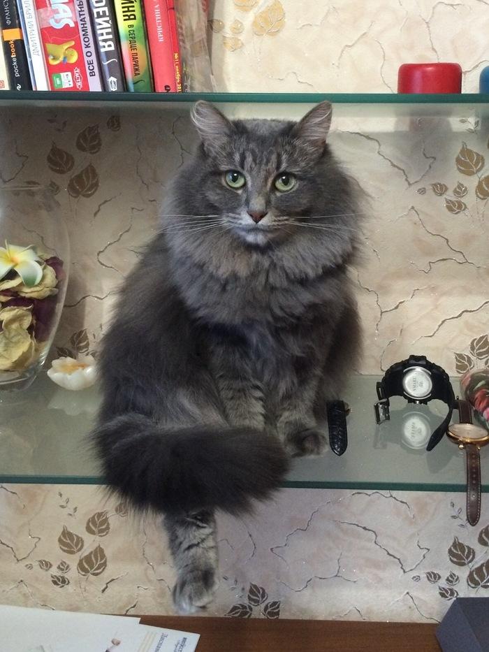 Вопрос Вопрос, Люди и кошки, Помощь, Поезд, Кот