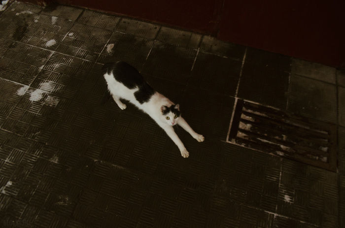 Киса у двери подъезда