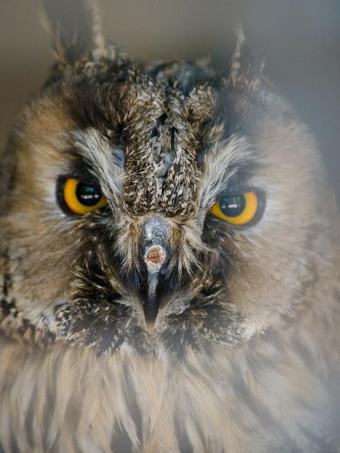 Приключения совы Истории, Сказка, Сова, Птицы, Животные, Борьба за выживание, Длиннопост