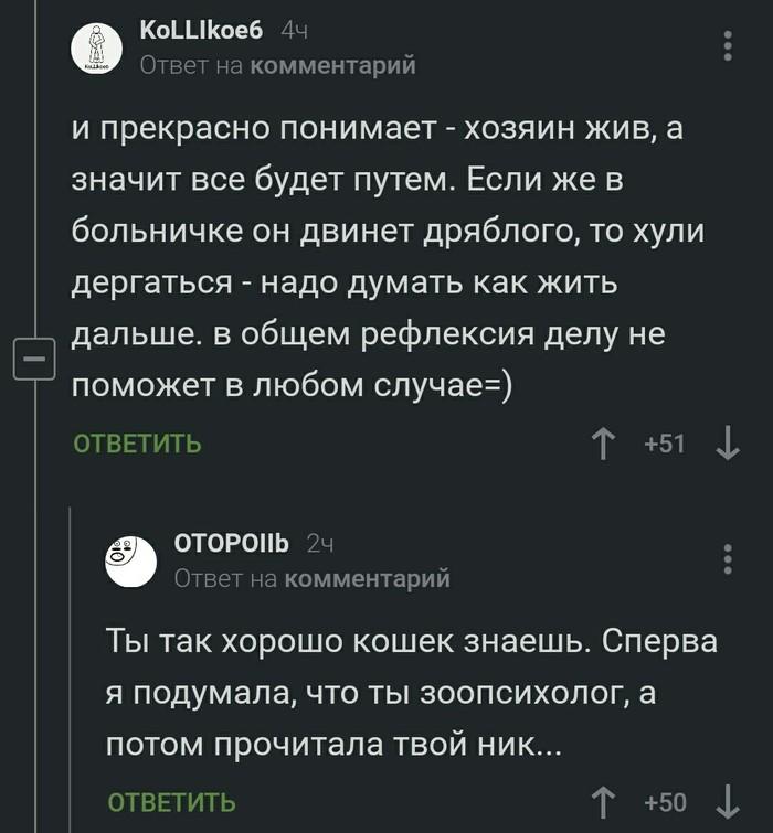 Кошачий знаток Кот, Комментарии, Знаток
