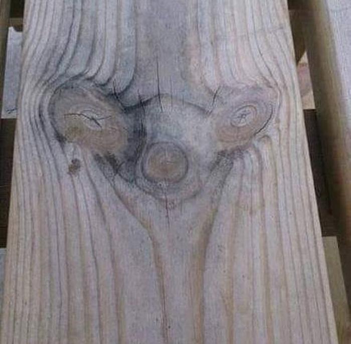 Всего лишь сучки. Дерево, Структура