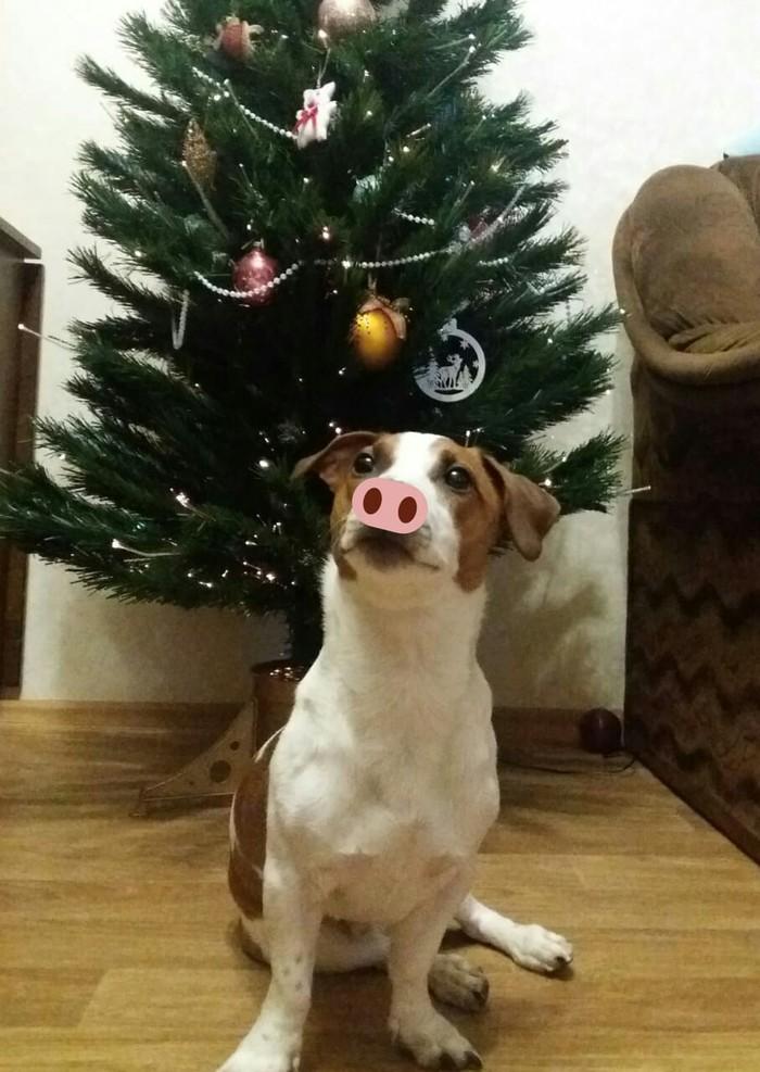 Новогоднего поросёнка вам в ленту