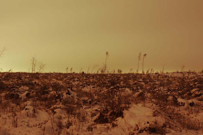 Два года назад здесь был лес Фотография, Лес, Ураган, Длиннопост