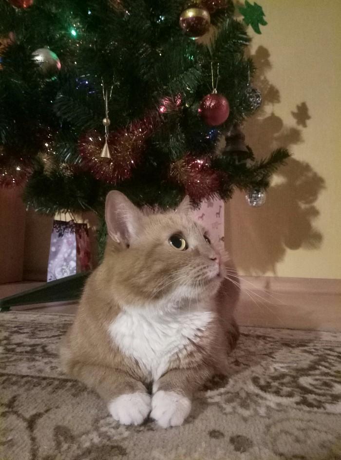 Новогодняя Рыжка Кот, Пушистый, Длиннопост