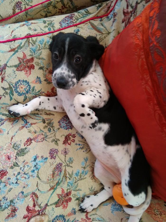 Помогите обрести дом маленькой кнопке Без рейтинга, Собака, В добрые руки, Ищу хозяина, Орск, Помощь