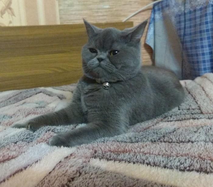 Тот момент, когда не кот живет у вас, а вы у кота