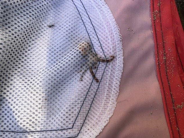 Австралийца чудом не укусил оказавшийся в кармане крошечный, но смертельно ядовитый осьминог Австралия, Мир смерти, Осьминог, Отравление, Смертельная опасность, Длиннопост