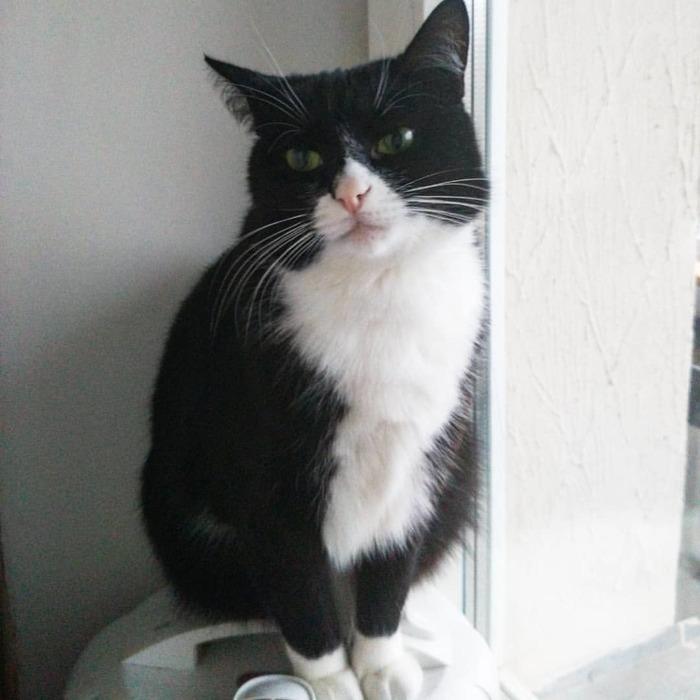 Пропал кот, Минск. Кот, Потеряшка, Потерялся кот, Пропал чёрный кот, Без рейтинга, Минск