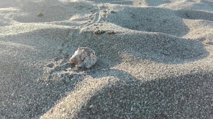 С Новым Годом с берега Тихого океана. Пляж, Океан, Поздравление, Длиннопост