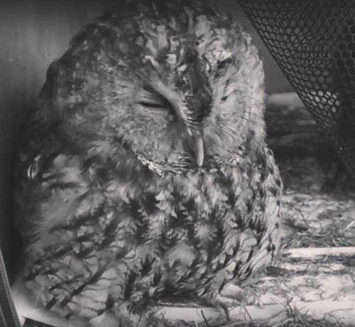 В продолжение истории с Совиным Домом, еще одна сова погибла Без рейтинга, Совиный дом, Все плохо, Живодеры, Сова, Длиннопост, Контактный зоопарк, Лига Орнитологов