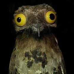 Козодой - птица 2019 года в Эстонии Козодой, Эстония, Птицагода, Ненуачебынет