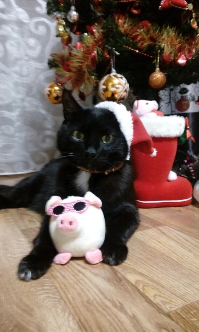 Наш старичок(11-12лет) желает Вам счастья в наступившем новом году! Кот, Котомафия, Новый Год