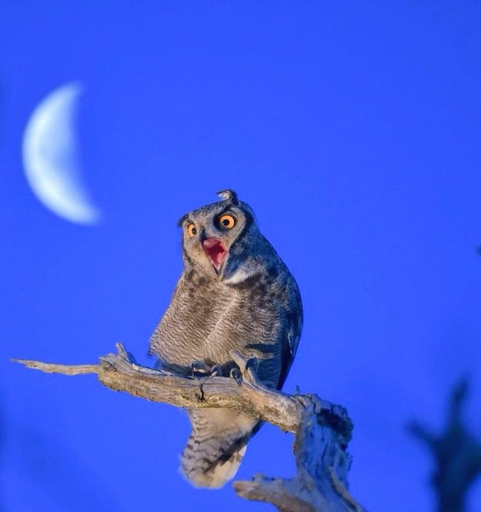 Когда окончательно сбился режим сна Птицы, Сова, Движение за позитивный Пикабу
