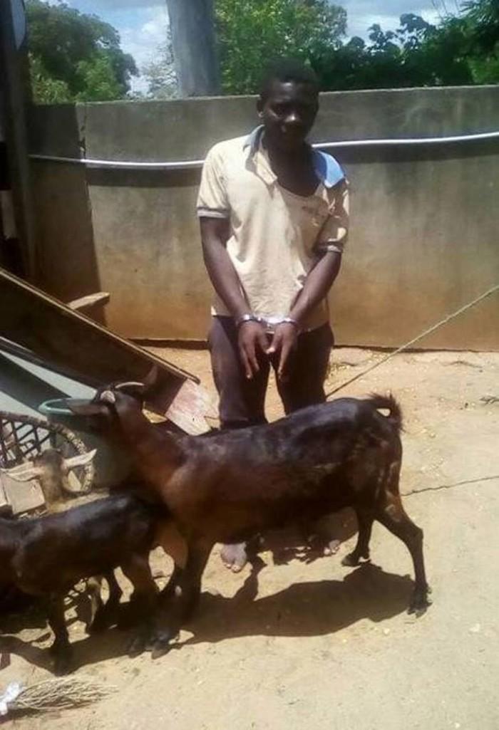 Любовь «по согласию» с козой окончилась в полицейском участке Африка, Коза, Негр, Зоофилия, Малави