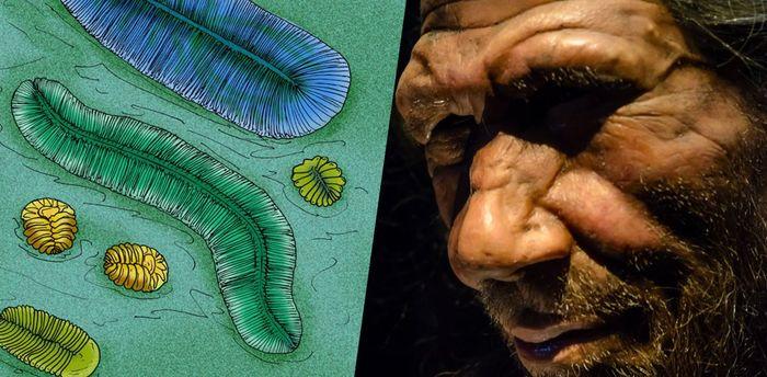ТОП-10 от Science: «ископаемые» открытия российских ученых Эволюция жизни, Эволюция, Палеонтология, Вендская биота, Денисовец, Длиннопост