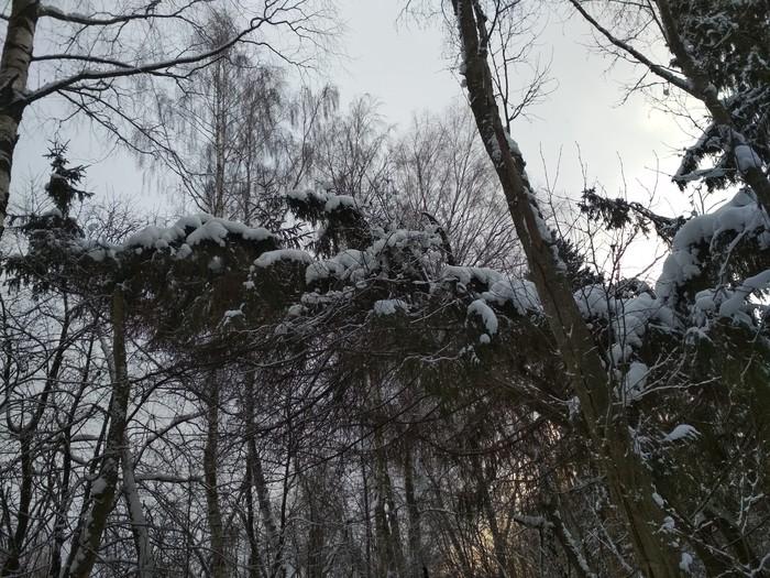 А жизнь продолжается ;) Катание на лыжах, Зимний лес, Ёлочка живи, В лесу родилась елочка, Длиннопост