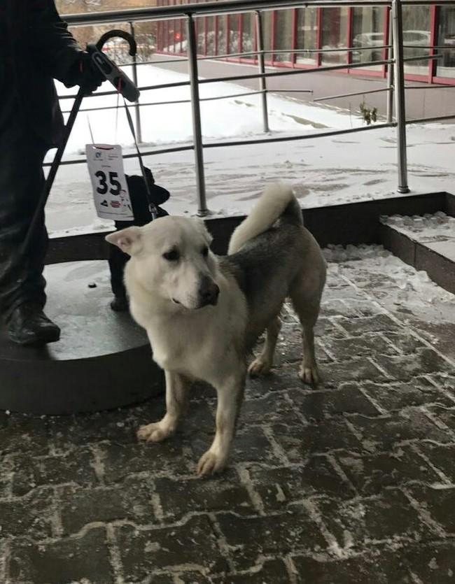 Пропал пёс. М.Проспект Вернадского Пропажа, Пропала собака, Собака, Длиннопост
