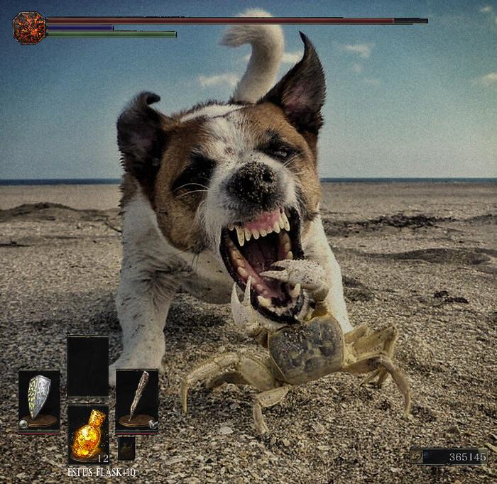 Я против босса в Dark Souls Краб, Собака, Босс, Юмор, Поединок, Милота, Dark Souls
