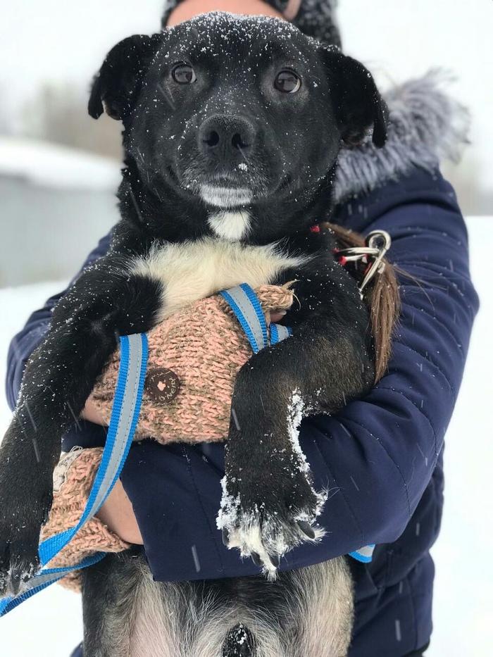 ОМСК!!! Особенная собака ищет дом. Собака, Без рейтинга, Омск, Домашние животные, Длиннопост