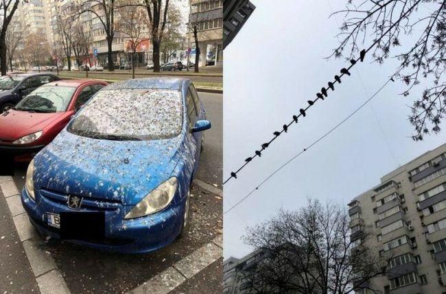 На счастье Примета, Птицы, Помет