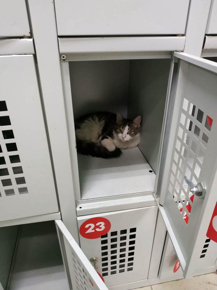 Пятёрочка выручает Кот, Магазин, Коробка и кот, Длиннопост