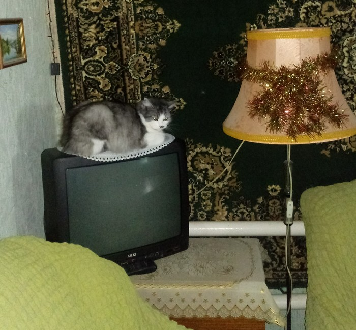 Все!Кина не будет, электричество кончилось Кот, Телевизор, Фотография