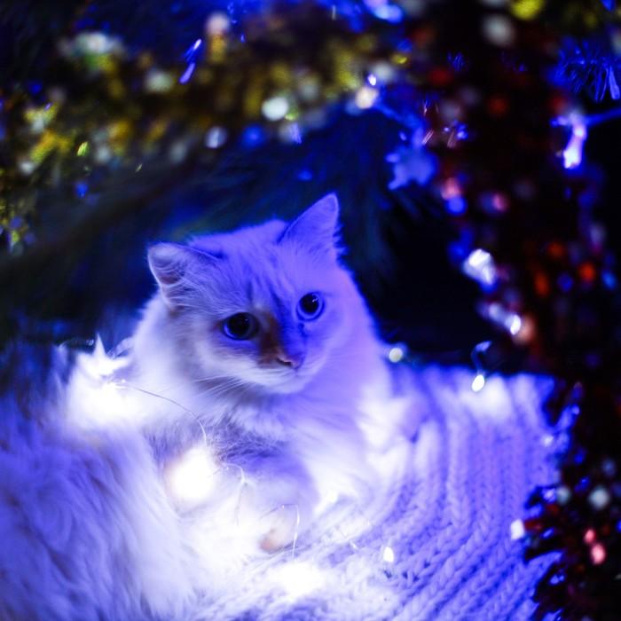 Кот под Ёлкой. Кот, Новогодняя елка, Фотография