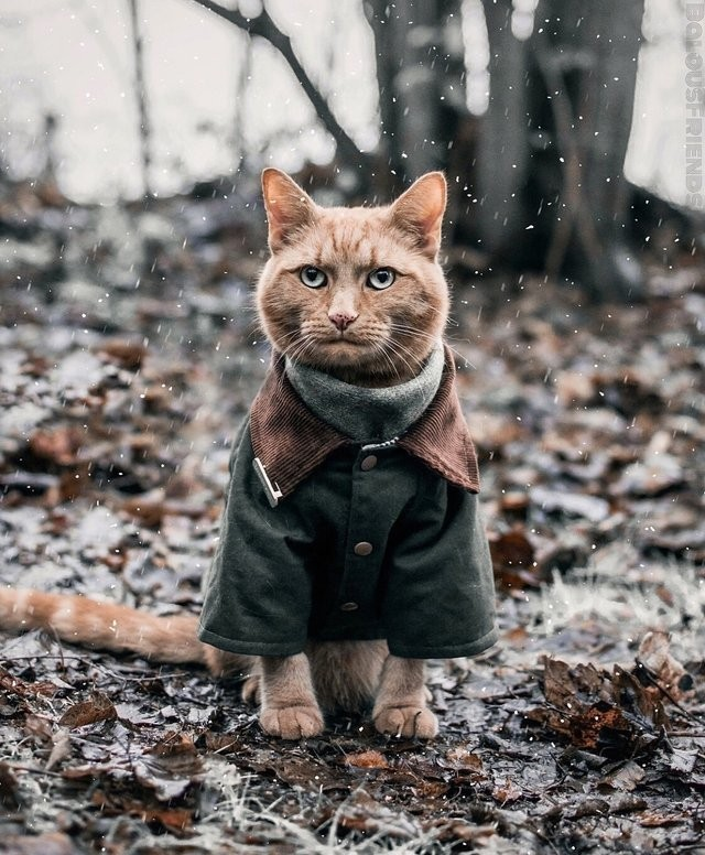 Кот в пальто