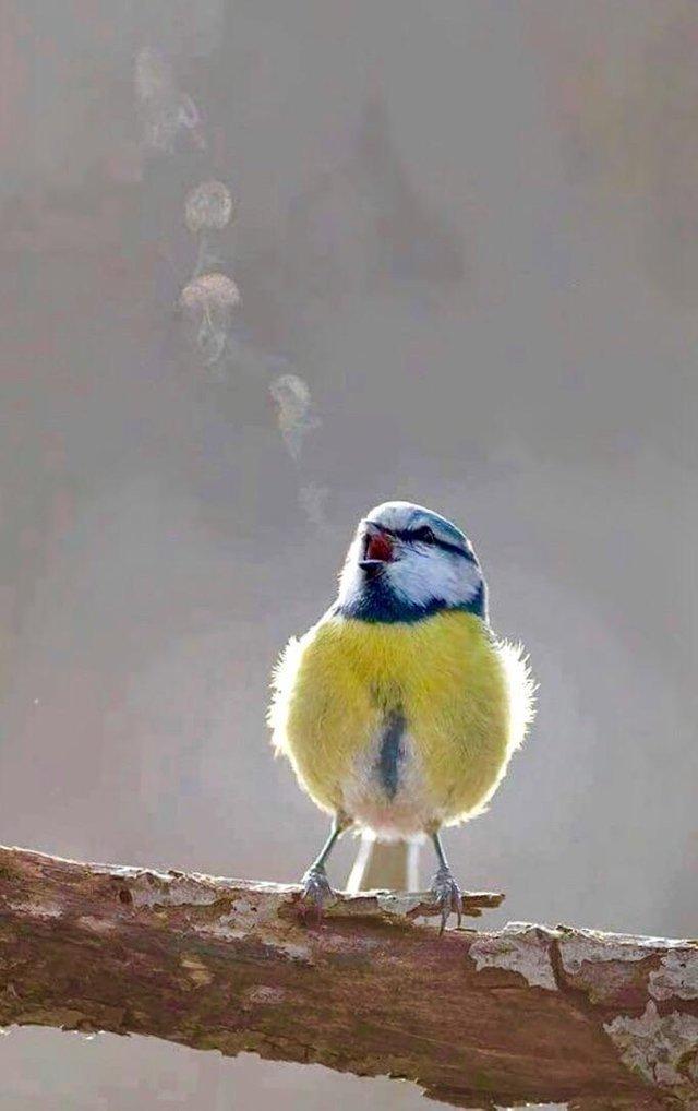 А здесь Вы можете увидеть птичью песню