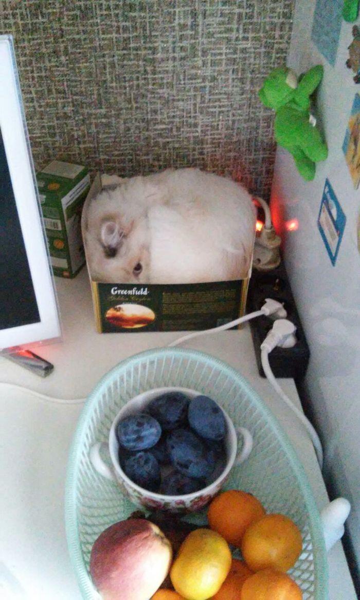 Кошка до и после поездки в тайгу на охоту. Котомафия, Кот, Длиннопост