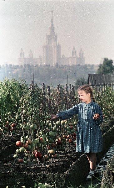 Урожай. Ретро фото, Москва