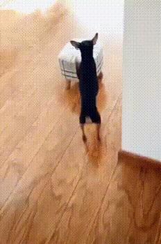 Эй,почисть мне ушки,пожалуйста!