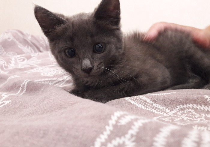 Однажды летом нашли котейку Кот, Шапка, Домашние животные, Длиннопост