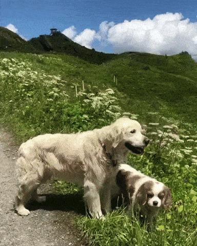 Просто прогулка с собаками в Швейцарии