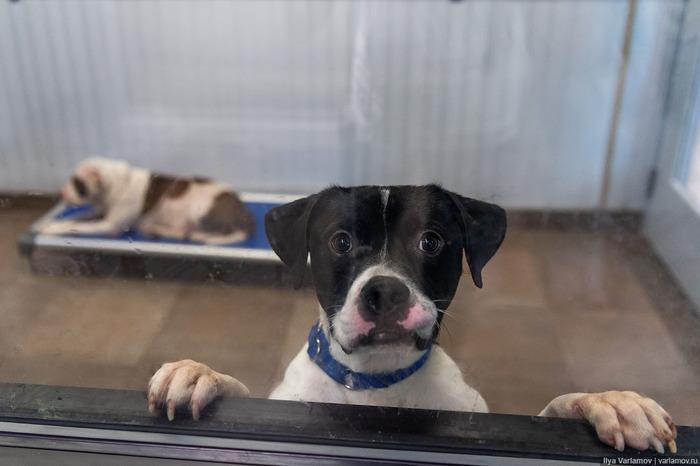 Приют для бездомных животных в Майами Домашние животные, Приют для животных, Майами, Варламов, Флорида, США, Длиннопост