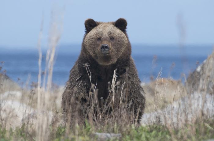 Доброта The National Geographic, Фотография, Медведь, Животные