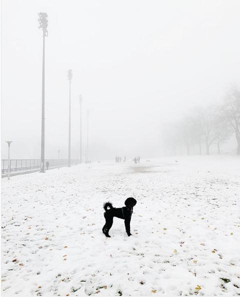 Собачка в канадском тумане