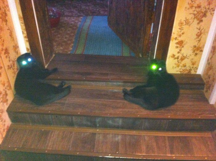 Когда твои глаза светятся от счастья Кот, Светящиеся глаза