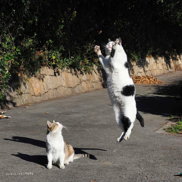 Неудачный прыжок Фотография, Животные, Кот, Прыжок