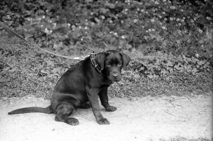 Лига пленочной фотографии. Мой дебют. Фотопленка, Черно-Белое фото, Хобби, Длиннопост