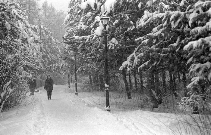 Февральский снегопад Фотография, Фотопленка, Черно-Белое фото, Nikon, Зима, Длиннопост