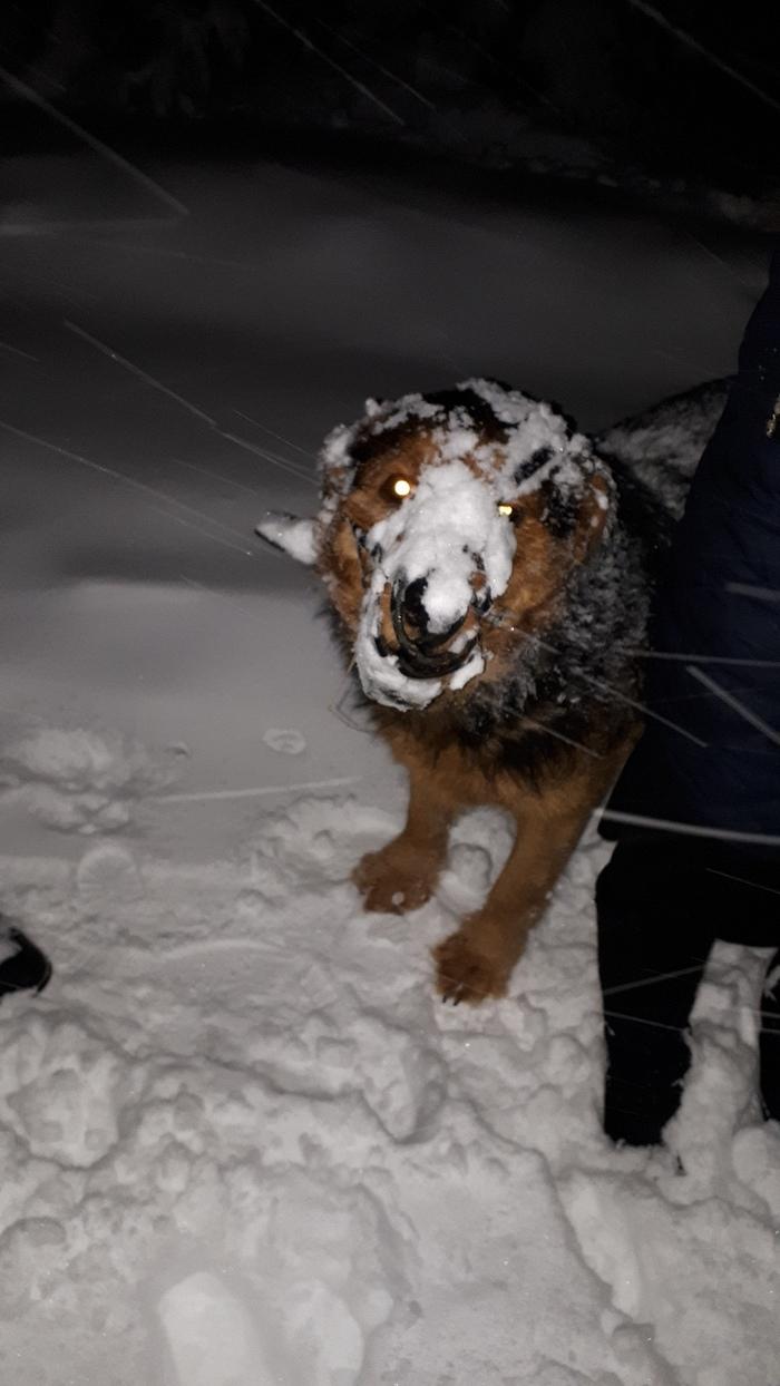 Порода - снегоед.