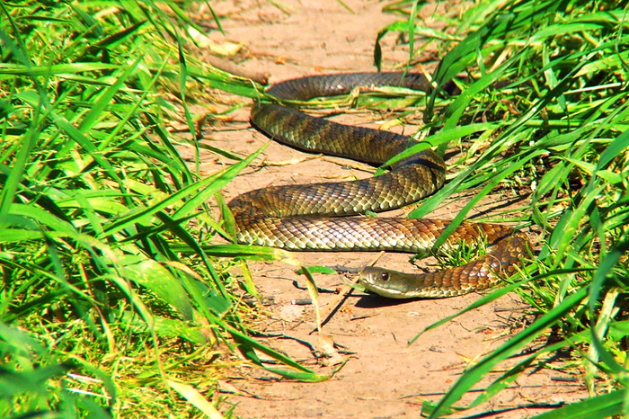 Девушки секс со змеями рыбами и другими млекопитающими