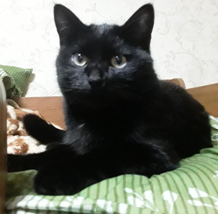 Мой кот Кувяка. Кот, Раковина, Мило, Котомафия, Видео, Длиннопост